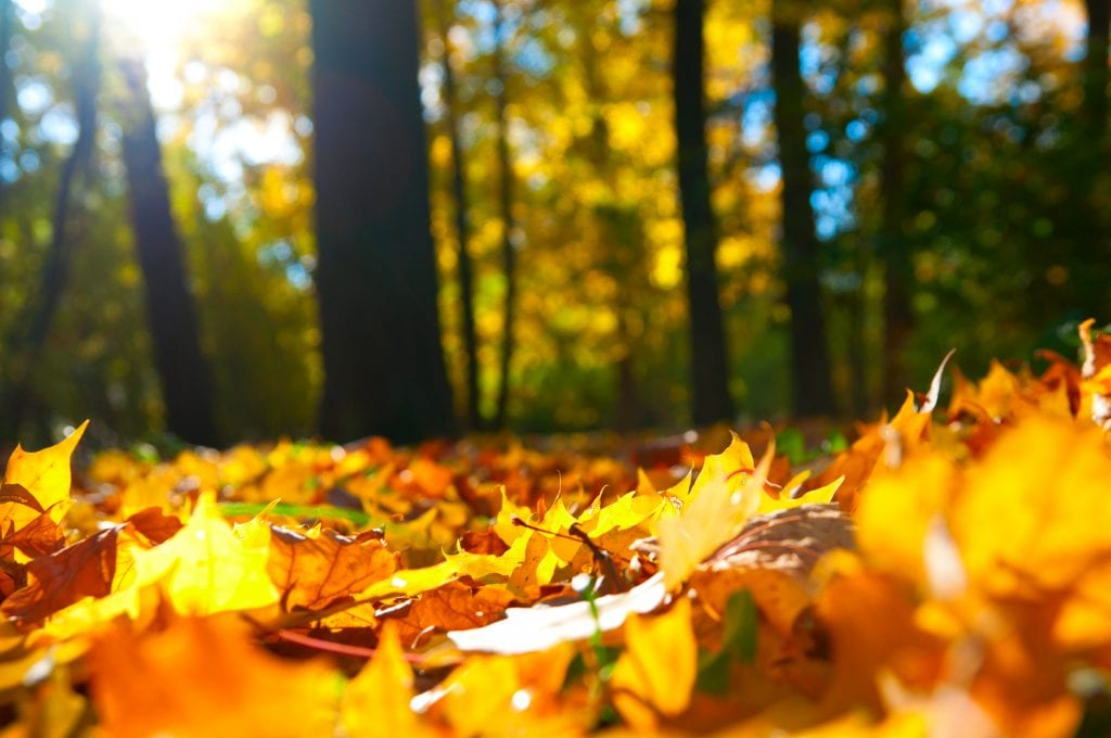 Comment préparer votre maison en vue de l'hiver, cet automne ?